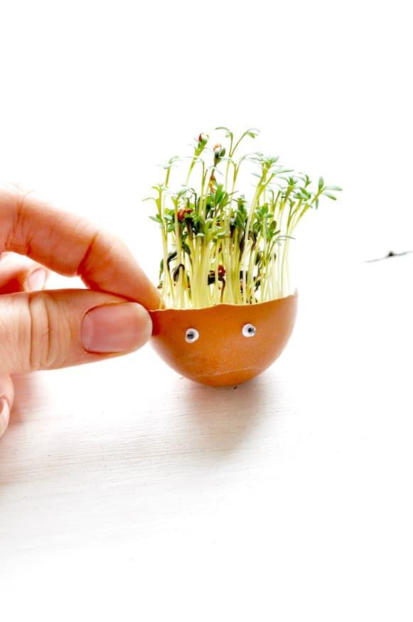 Einfache Kresse Eier zu Ostern von Fräulein Selbstgemacht
