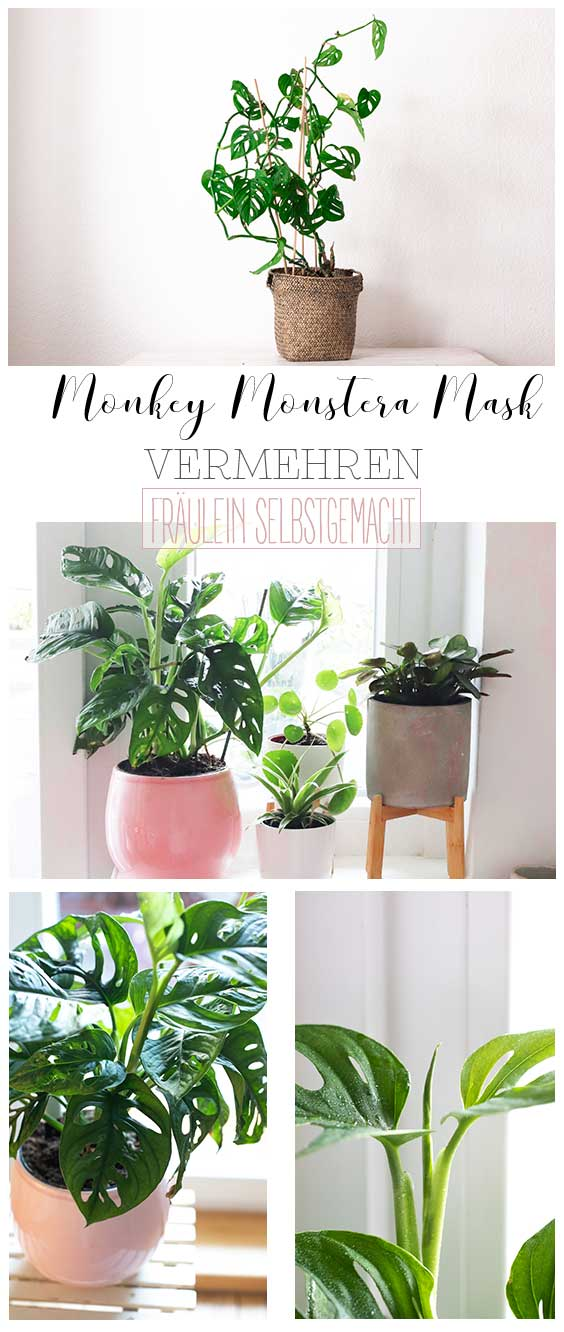 Pinterest_Pin_Monkey_Monstera_Pin