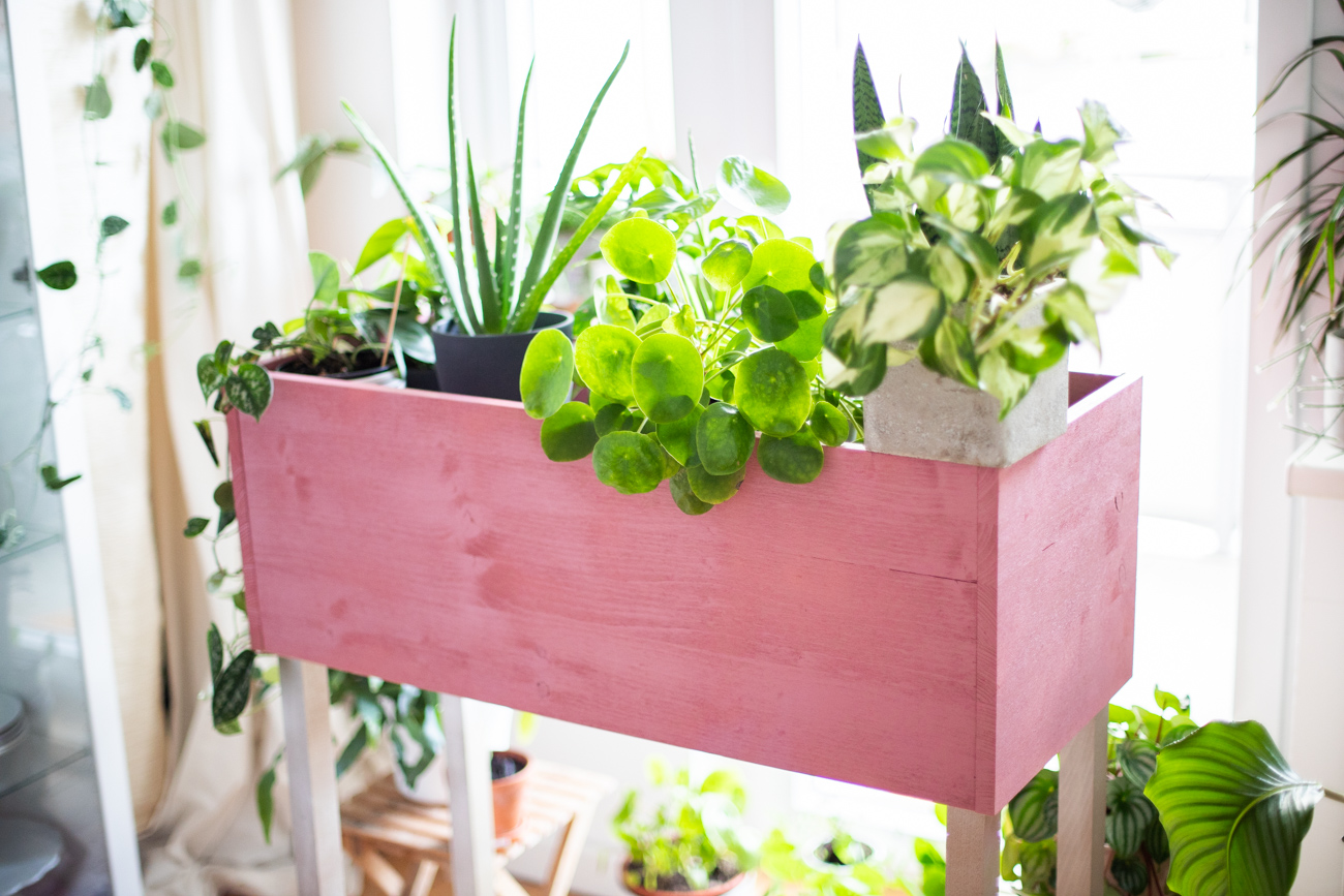 diy_plantbox_interior_pflanzen-box-53
