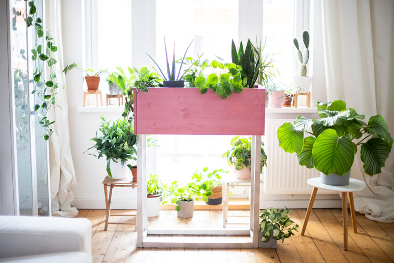 diy_plantbox_interior_pflanzen-box-titelbild